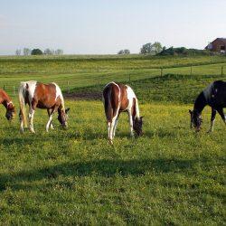 Großzügige Koppelflächen - Pferde-Reha-Huttenried