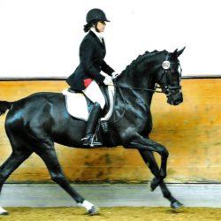 Auch Sportpferde werden therapiert - Pferde-Reha-Huttenried