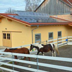 Pferde-Reha-Huttenried-Bild-0009