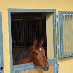 Pferde-Reha-Huttenried-Bild-0010