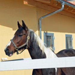 Pferde-Reha-Huttenried-Bild-0011