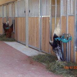 Pferde-Reha-Huttenried-Bild-0016