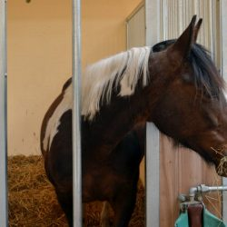 Pferde-Reha-Huttenried-Bild-0017