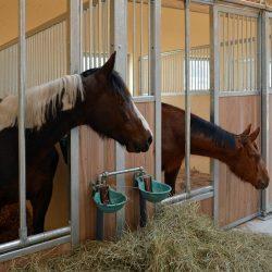 Pferde-Reha-Huttenried-Bild-0018