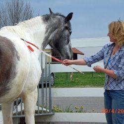 Pferde-Reha-Huttenried-Bild-0023