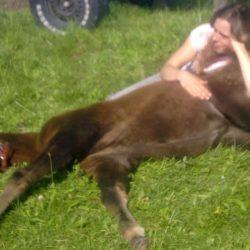 Pferde-Reha-Huttenried-Bild-0025