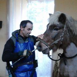 Pferde-Reha-Huttenried-Bild-0030