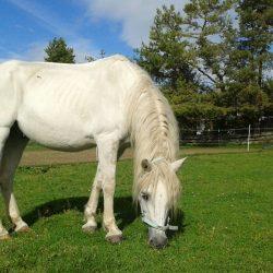 Pferde-Reha-Huttenried-Bild-0032